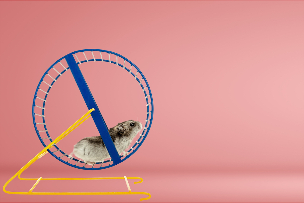hamster-trying-to-come-up-with-digital-marketing-ideas